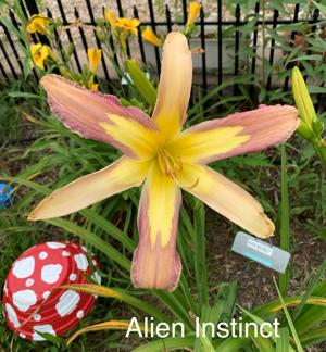 Alien Instinct - BuchananA